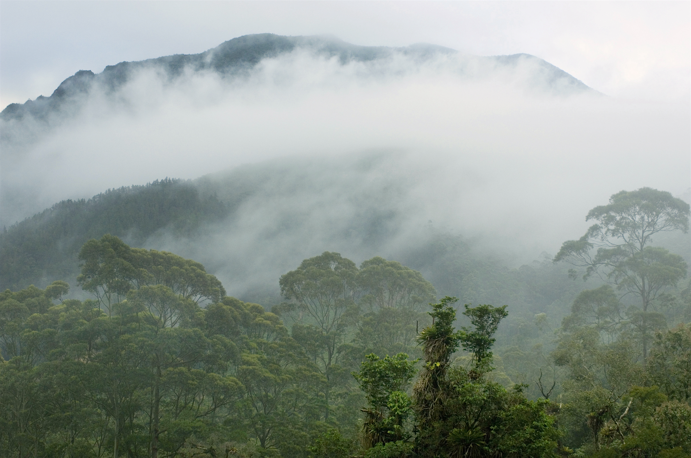 Atlantic Forest, southeast Brazil, Photo: Kevin Schafer