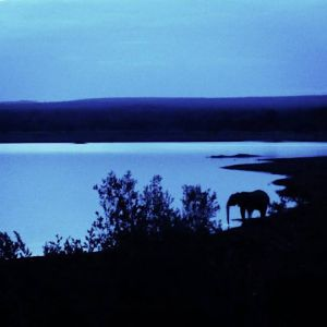 Tranquil night scene at one of the conservancy's dams