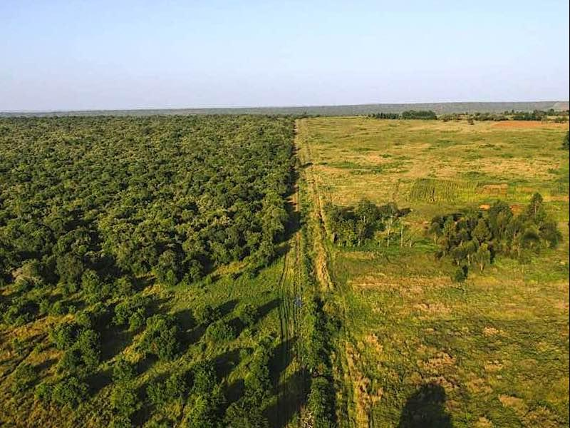 The border of the reserve shows a stark contrast with neighboring lands
