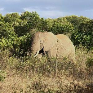 Hundreds of elephants take refuge in the reserve