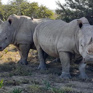 rhinos (photo: Margo Welch)