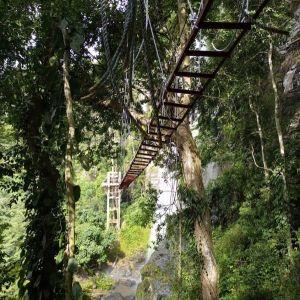 Herp Ghana canopy walkway