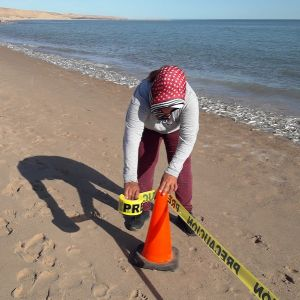 demarcating the protected beach