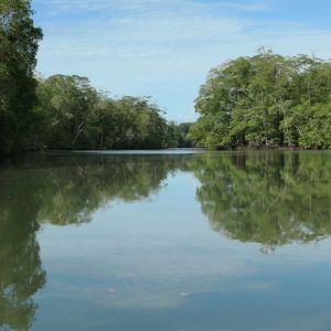 Mangroves (photo: Scott Hecker)