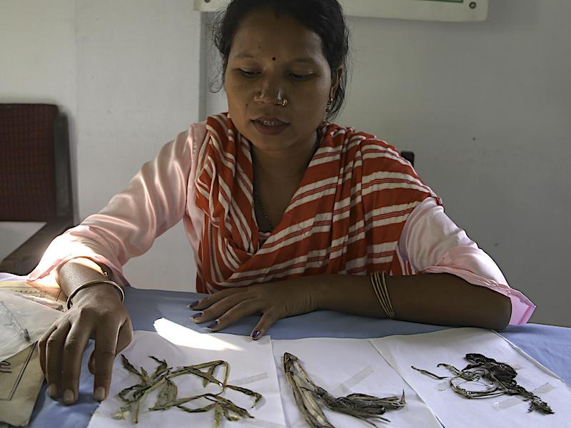 Herbarium created (photo: Amrita Sardar)