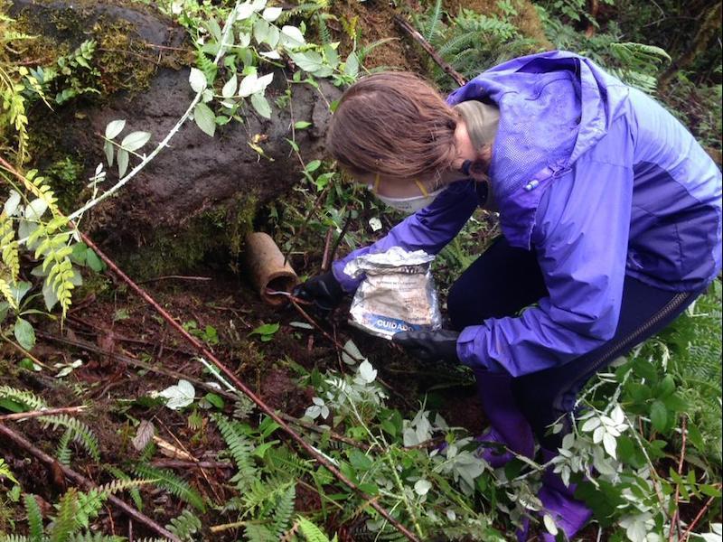 7. volunteer clearing invasive blackberry (rubus, five varieties) - credit fundacion jocotoco copy