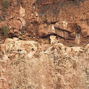 Rupells vultures on kwenia cliff copy