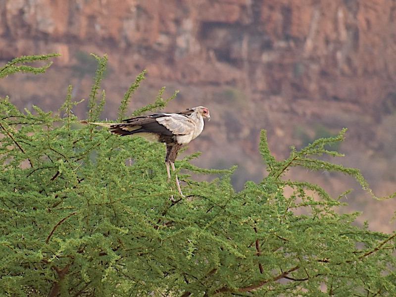 Secretary bird at the base of the kwenia cliffs copy