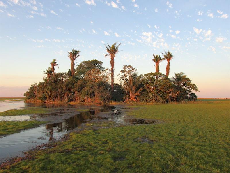 Palm island and sandpiper habitat (photo: Bennett Hennessey)