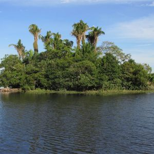 Three Palm Iisland on Rio Tiniji