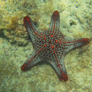 Bahia santa elena 0620 estrella de mar 15julio2015
