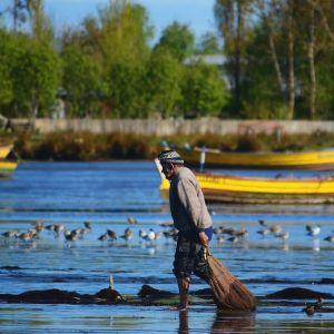 Fisherman  shorebirds