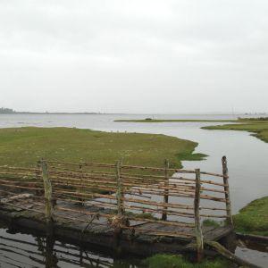 Maullin habitat (photo: Conservacion Marina)