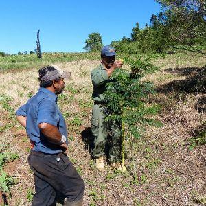Measuring tree (Jose Fernandes)
