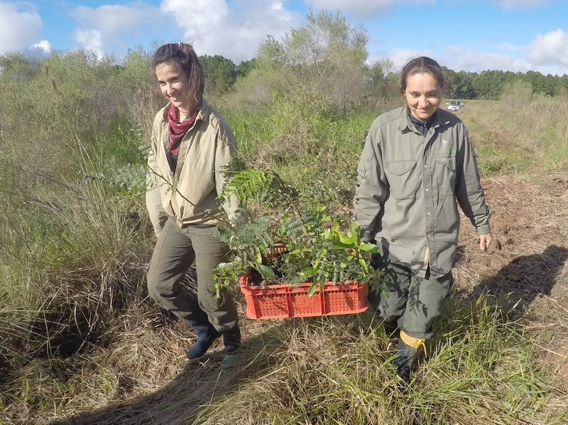 planting tree seedlings (credit Nestor Farina)