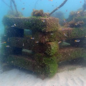 conservation and anti-trawling structure