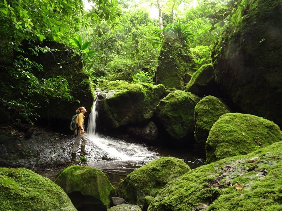 Waterfall - Cerro Chucantí. Cerro Chucantí forms part of an important watershed where many streams and rivers originate.