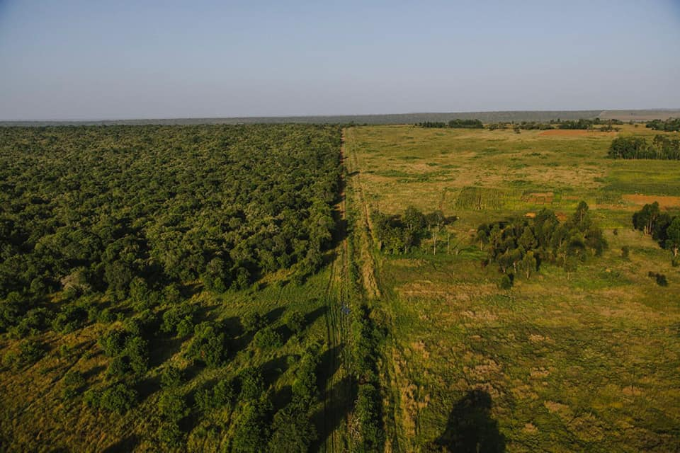 A view along the fenced eastern border of the conservancy shows what a difference conservation can make!  The fence keeps illegal cattle grazers and poachers out, and also keeps the conservancy elephants from destroying neighboring small holder farms. The northern border remains unfenced.