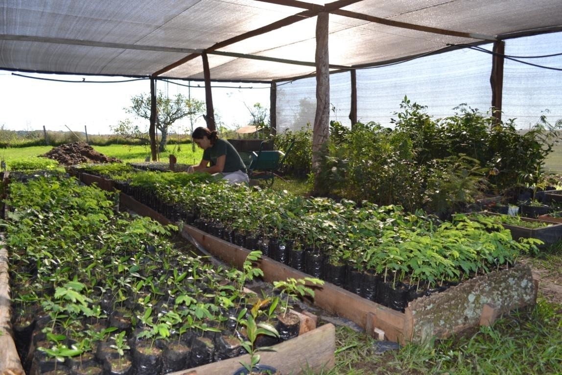Nursery for native trees.  photo: Nestor Fariña