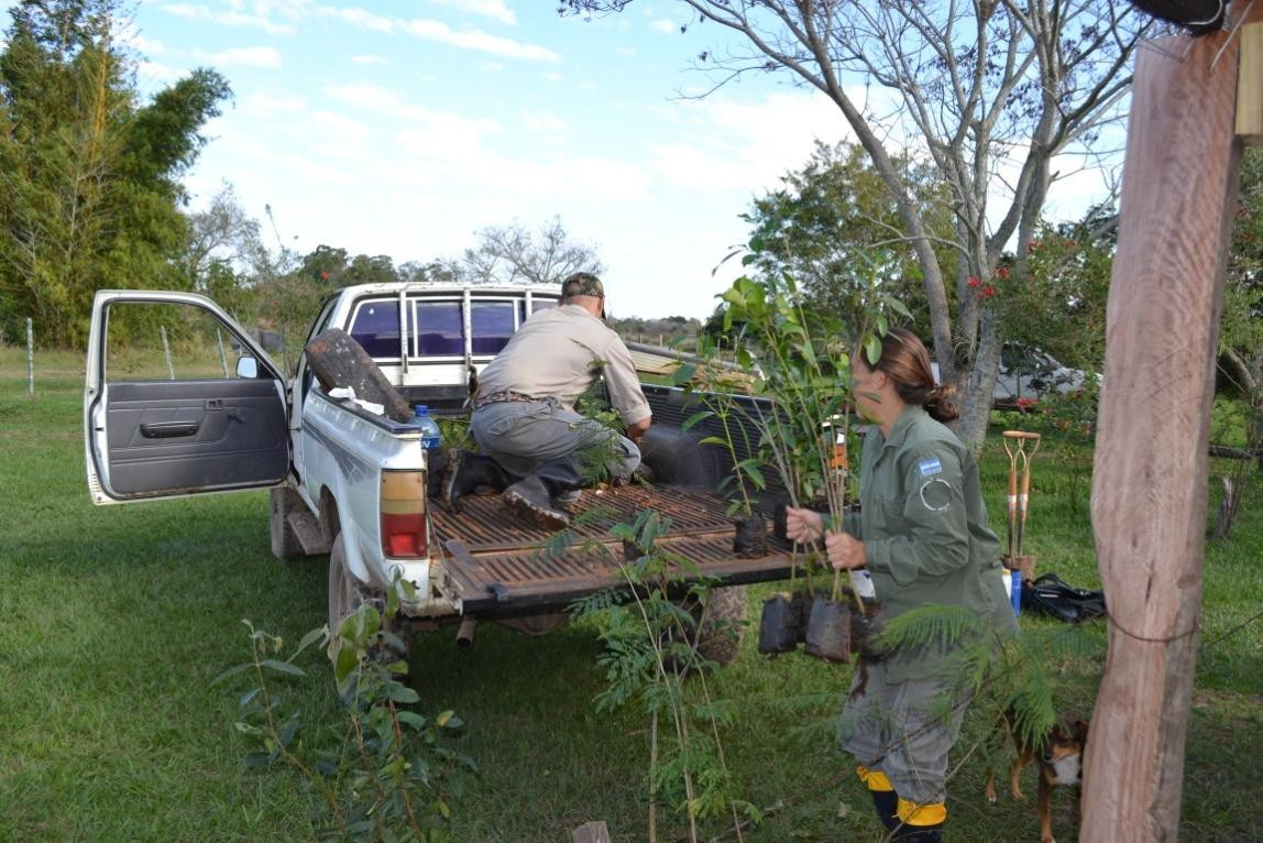 Saplings ready to plant are loaded for transport. Photo: Nestor Fariña