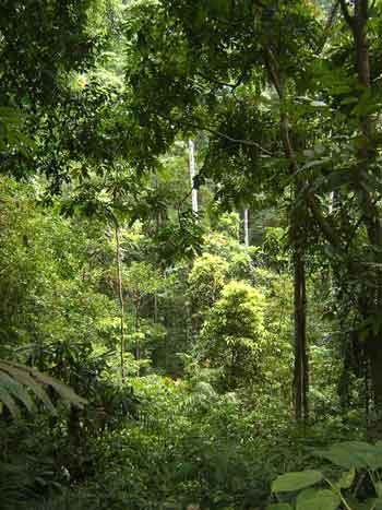 Tompotika rainforest. photo: AlTo