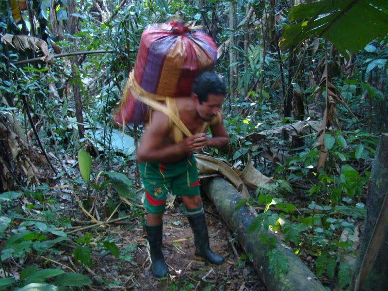 A Tacana man carries a load of collected Brazil nuts. photo: ACCEA
